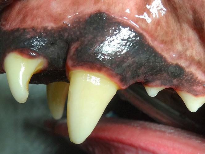 Pet Endodontics - Root Canal Treatment