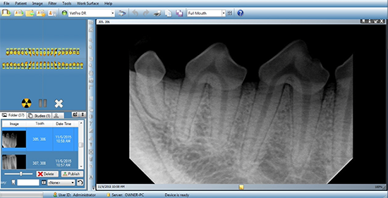 Pet Dental Radiography : Dental X-Ray in Dog