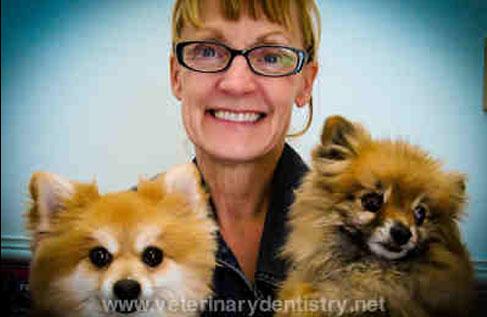 Pomeranian Dog with a Periodontal Disease