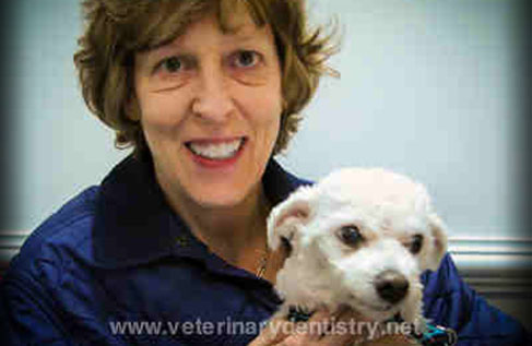 Tooth Extraction in Dogs